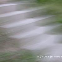 DA 2019 06 Forrest Flow_18